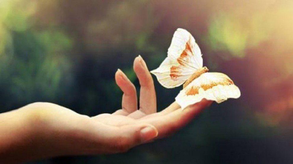 instant présent papillon